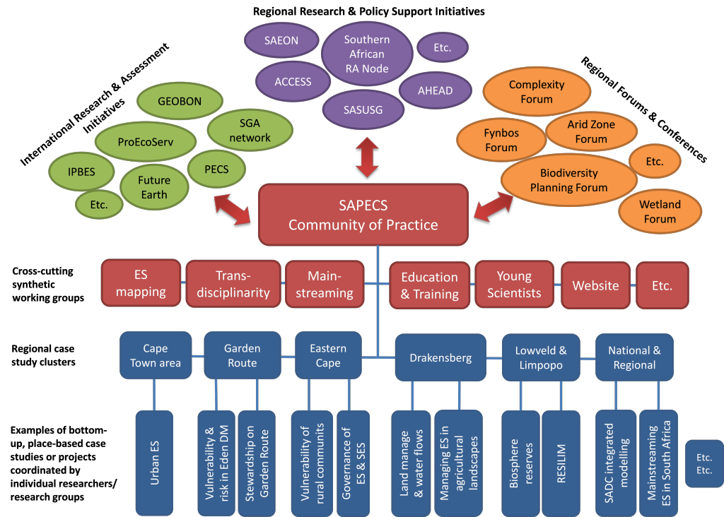 Organization of SAPECS and links to other regional and international initiatives