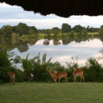 View from Mukambi Lodge on the banks of the Kafue River, Zambia